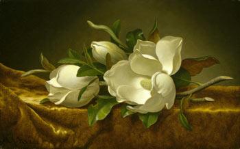 Magnolias on Gold Velvet Clothc. 1888-1890, Martin Johnson Heade